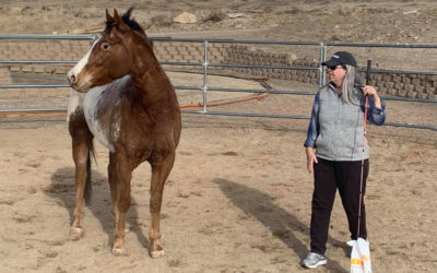 """Meeting Needs: Working With the """"Mind"""" Horse in the Round Pen"""