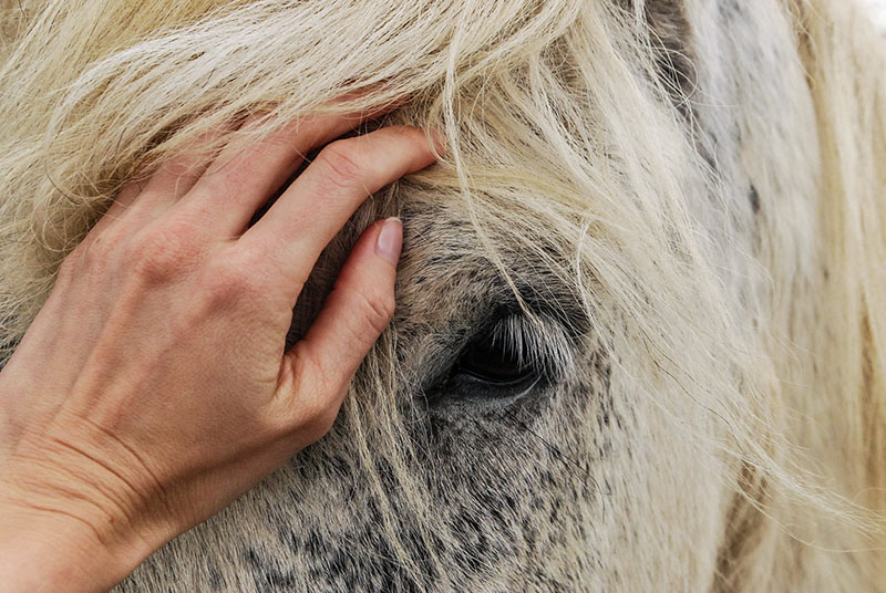 horsemanship clinics online
