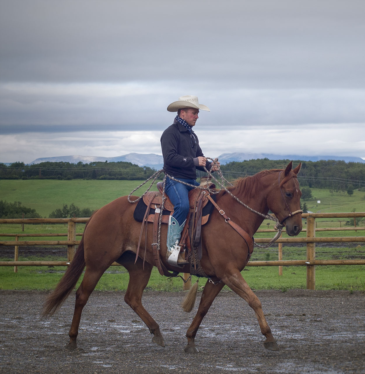 online horsemanship training courses