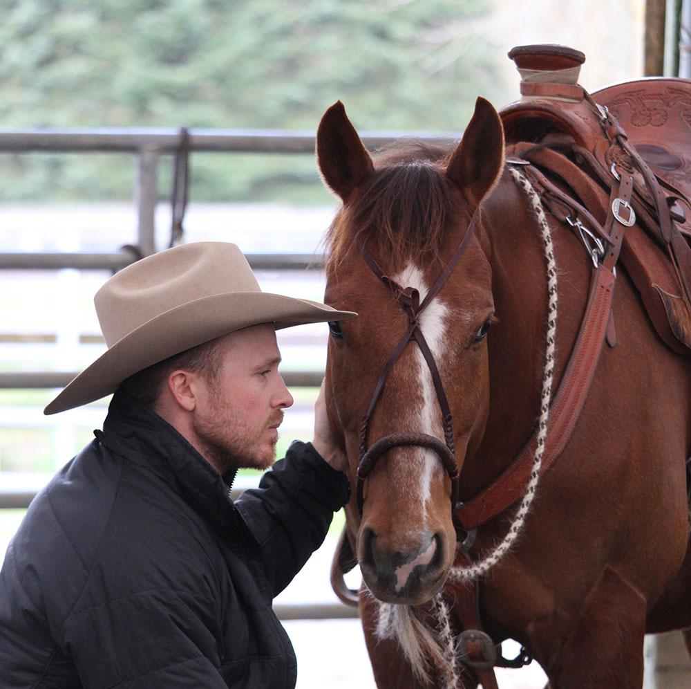 horse mentorship programs